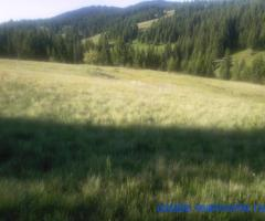 Land for sale North Montenegro,Sljeme near Zabljak