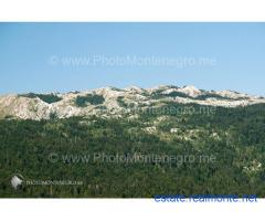 Land with a forest in mountain Golija, Montenegro - Last ofer